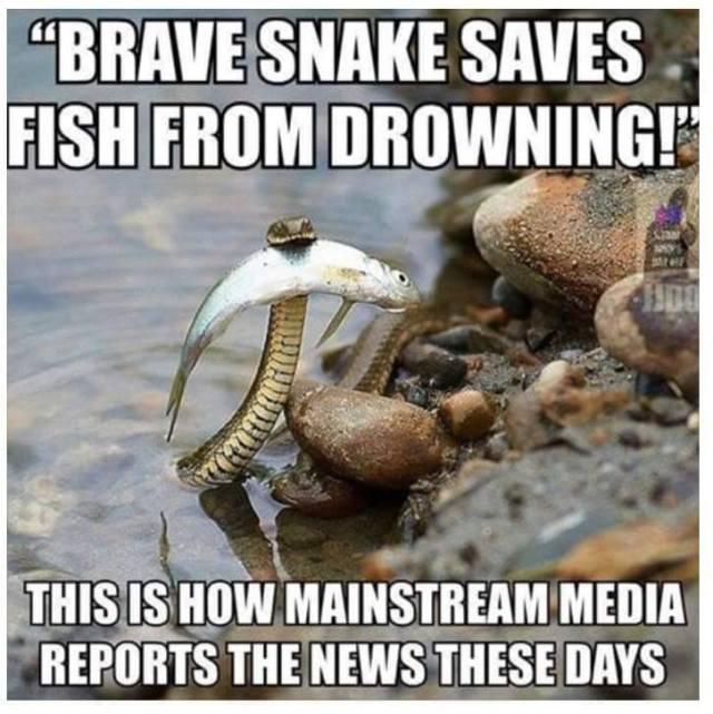 Media and brave snake
