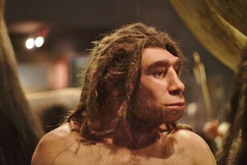 "<span style=""font-size: 8pt;"">Homo neanderthalensis by <a href=""https://www.flickr.com/photos/66451944@N03/42396583455/in/photolist-27ArzbP-eFACVg-eFADJp-eFADkn-boB2CQ-pyA5Ej-8ac8Ls-i5xhxG-8Gb3cn-8a9hT4-8a9mkc-848Qcb-CHxd7-c6AiQ1-sfEp4U-4RGExr-8Gee5G-8Geeoh-C5gqgN-8Gb3r8-ph84YL-CUujti-8Gb2XT-dfL4Ht-c6yJ8w-8Gb2sr-8GeeFm-5vb6cT-dfL4Pv-c6AjnQ-6B1Lx6-ZkCVE-4Dyiwy-85STG6-eaakwt-4giSK1-aJkB5c-MuqrCA-8GeeWU-RgYxg-bfCR5z-eJdzXj-bfgZET-6z8rbu-tuYCT-84vzS6-251dG5S-23CJZiY-bfCRcp-bg2iuH"">Thomas Vogt</a>-Flickr (<a href=""https://creativecommons.org/licenses/by-sa/2.0/"">CC BY-SA 2.0</a>) [Brain volume up to 1750cc (Homo sapiens average 1270 cc) LWL Museum of Natural History, Münster, Germany]</span>"